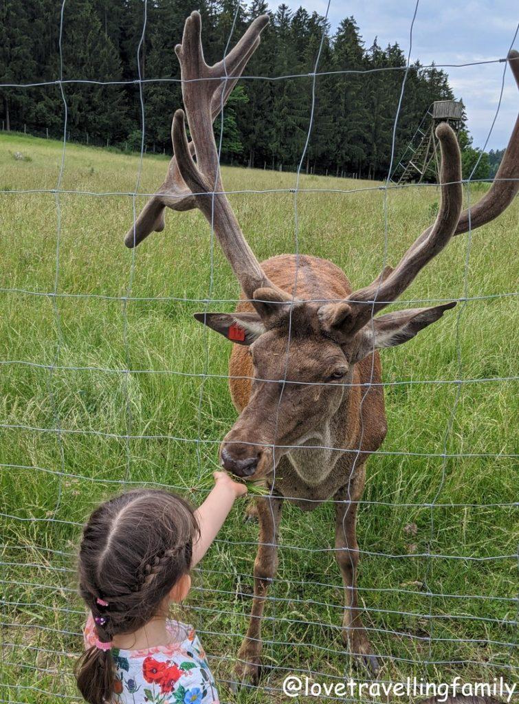 Wildpark Oberreith - Hirsche beobachten und füttern