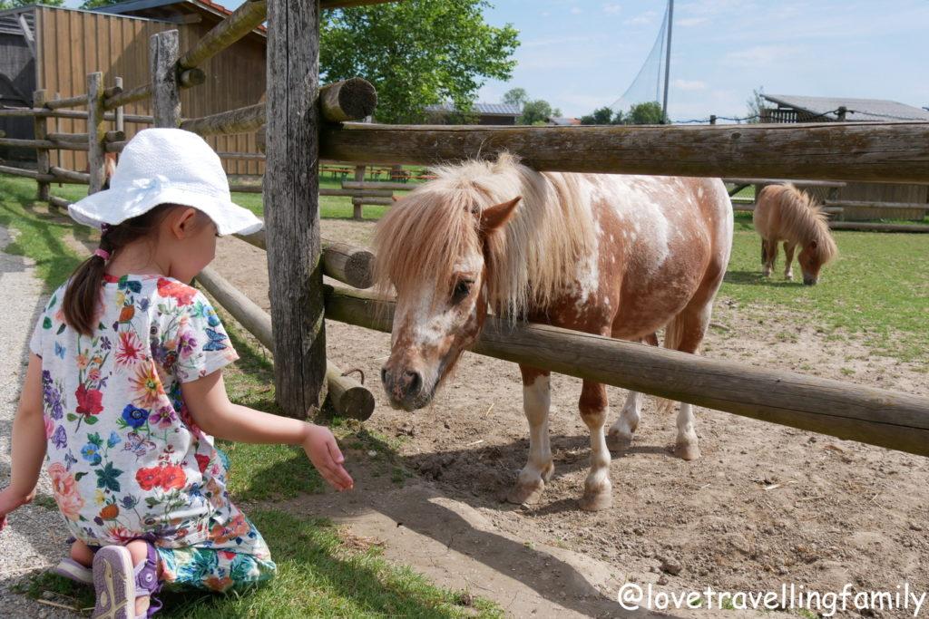 Wildpark Oberreith - Streicheln und Füttern