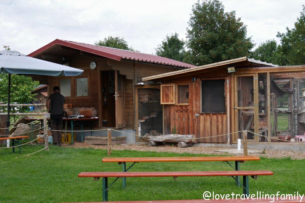 Wildpark Oberreith - Greifvogelschau