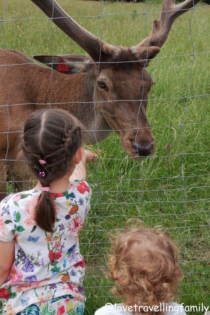 Wildpark Oberreith - Hirsche und Rehe beobachten und füttern