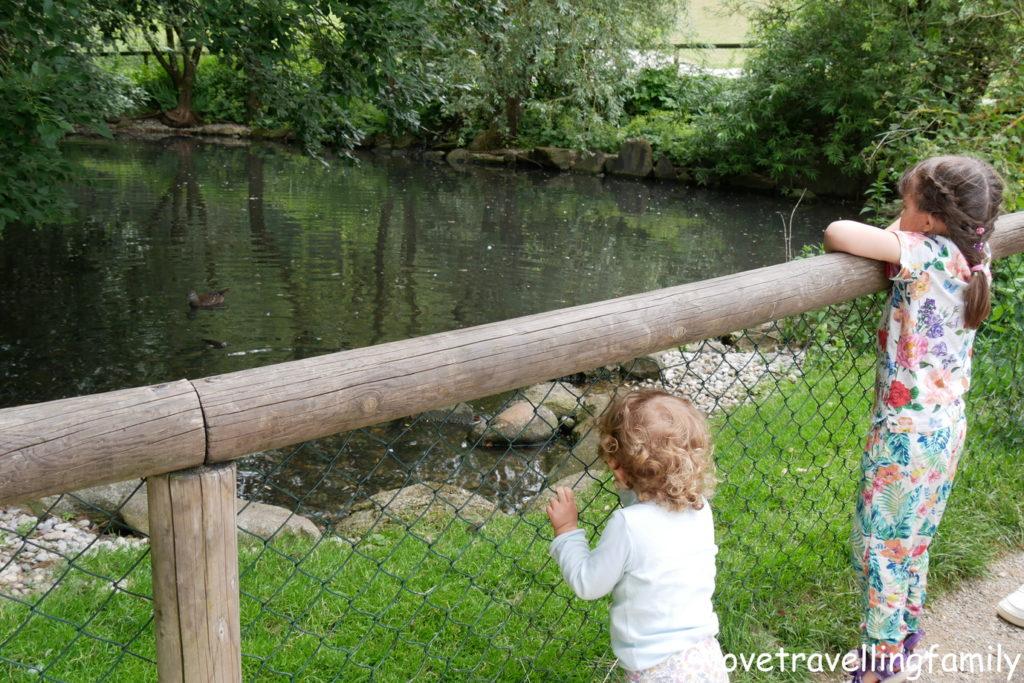 Wildpark Oberreith - Teich mit Karpfen