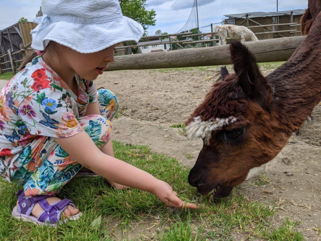 Wildpark Oberreith - Streicheln unf Füttern